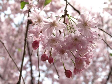 blog-gyoen-sidare.JPG