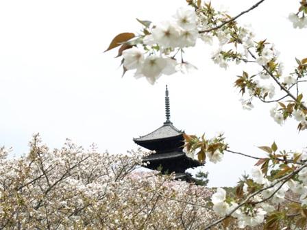 blog-ninnnaji-gozyunoto.JPG