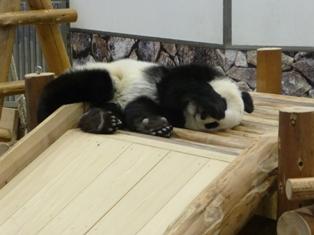 panda09sum1.JPG