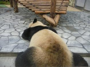 panda09sum2.JPG