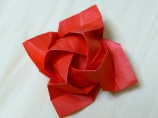 rose090525.JPG